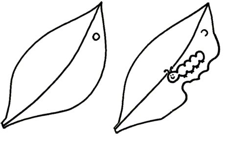 caterpillar egg coloring page free coloring pages of butterfly cocoon