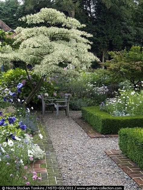 17 best images about east facing garden on pinterest gardens sun and shade plants