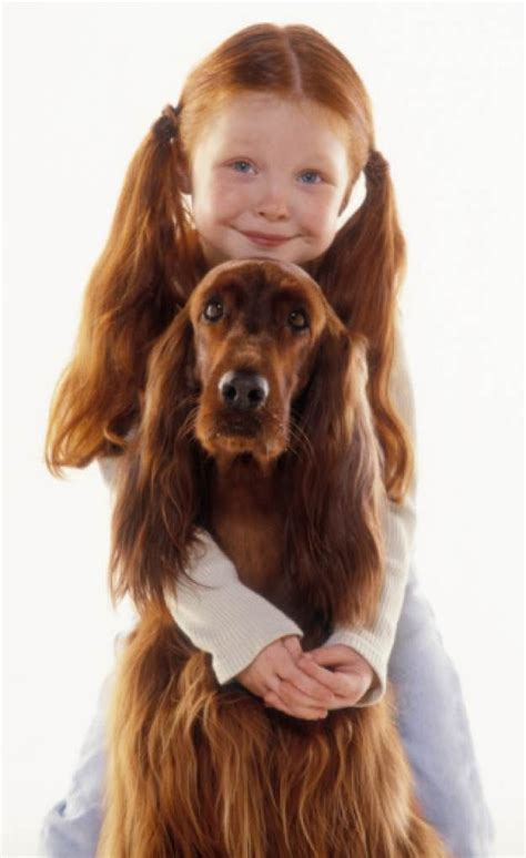 dogs that are with children 25 best ideas about setter dogs on setter setter