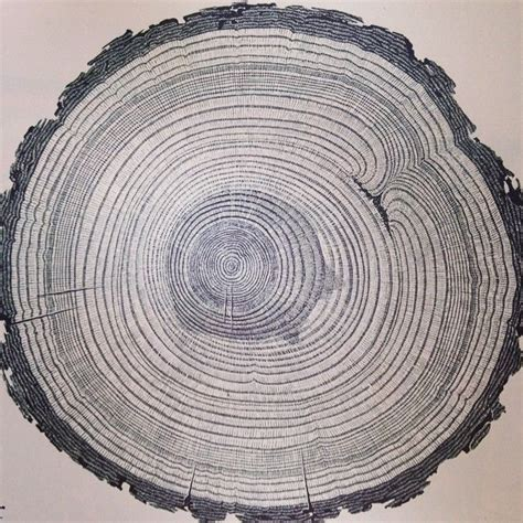 tree cross section cross section of a ponderosa pine from an old national