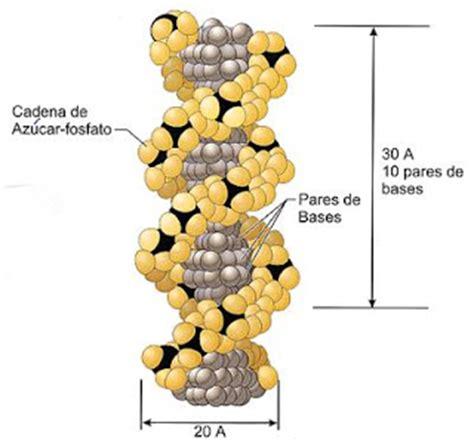 imagenes de estructuras naturales macromol 233 culas naturales y sint 233 ticas macromol 233 culas