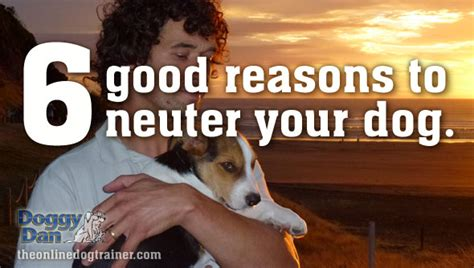 neutered dog marking in house 6 reasons why you should neuter your dog the online dog trainer