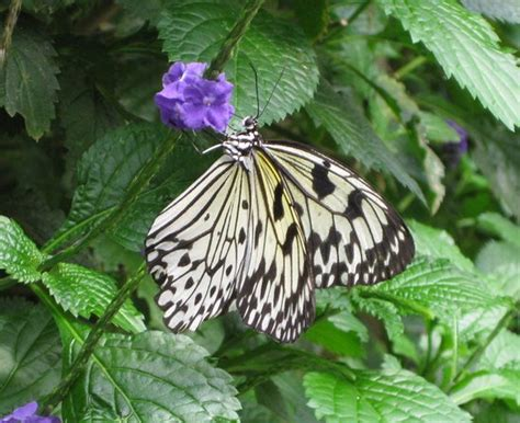 Butterfly Garden Ma by Ranked 1 Of 3 Attractions In South Deerfield