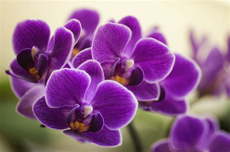 orchids facts things you didn t know about orchids orchid fun facts