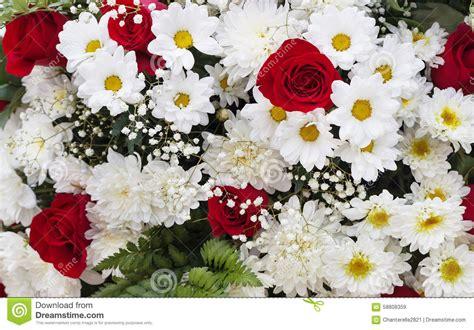 imagenes de flores rojas y blancas ramo de flores rojas y blancas foto de archivo imagen