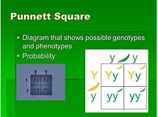 Words to know Test cross Genotype F1 generation Phenotype ... F1 Generation Punnett Square