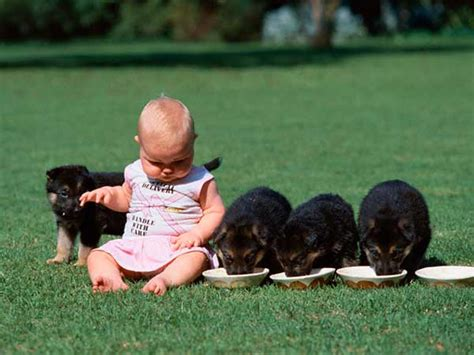 puppies and toddlers dogs and children and dogs at home how to keep children safe from dogs