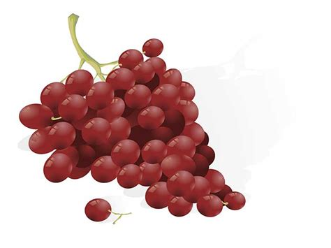 are raisins bad for dogs true warning grapes and raisins toxic to dogs and cats