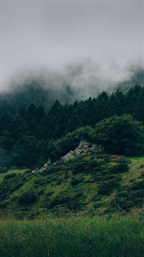 wallpaper forest   wallpaper  mist hills fog