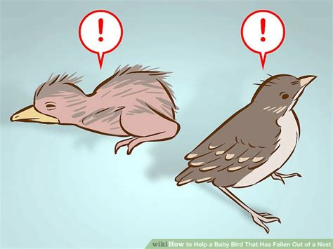 How To Make A Bird Call Out Of Paper - how to help a baby bird that has fallen out of a nest 14