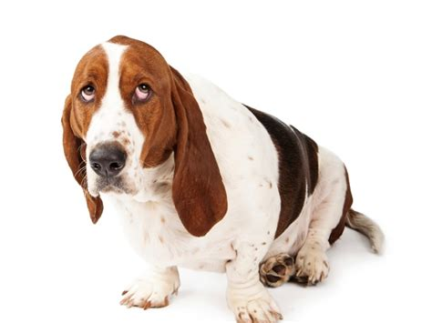 fear of dogs how to overcome your fear of dogs healthy living indiatimes