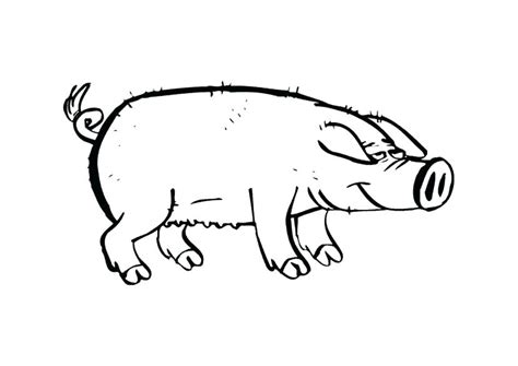 teacup pig coloring page guinea pig coloring pages holding guinea pig coloring