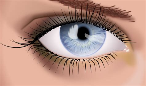 imagenes de ojos de jaguar vector ojo femenino idjosemiguel