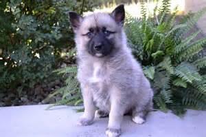 Pet for sale