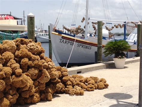 freedom boat club hudson tarpon springs sponge docks boat club fishing freedom