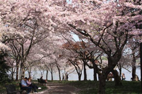 cherry tree maine events national capital regional office u s national park service