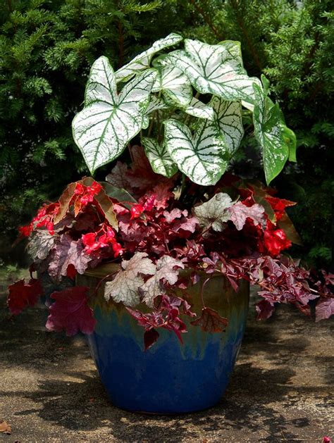 shade potted plants shade container outdoors pinterest