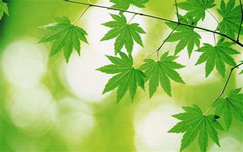 backgrounds for green leaves and green backgrounds