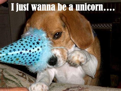 unicorn puppy unicorn puppy by sparkleamber0005 on deviantart