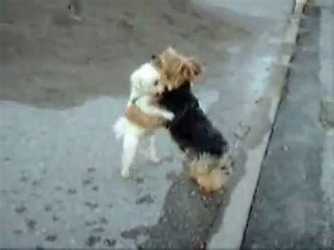 imagenes chistosas bailando perros chistosos perros bailando estoesdivertido com