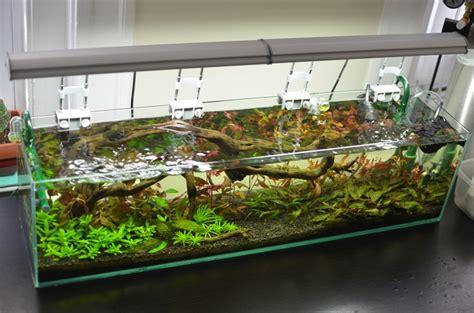 aquarium design in bangladesh 47 best set up fish tanks images on pinterest fish