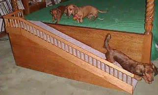 Dachshund Stairs Or Ramp by Ok Our 6 Year Old Toy Poodle Poss Bichon Has Been