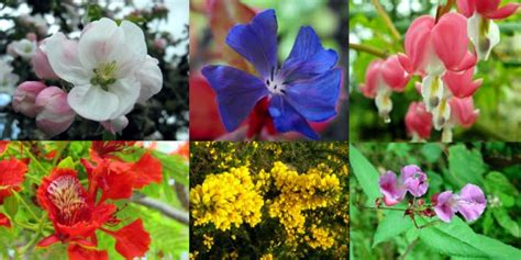 fiori di bach 39 fiori di bach
