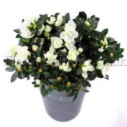 Winter Patio Plants Winter Plants As Gifts Flowers Blog Flowers Tips And