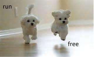 Free Puppies Run Free Dogs Photo 28247568 Fanpop