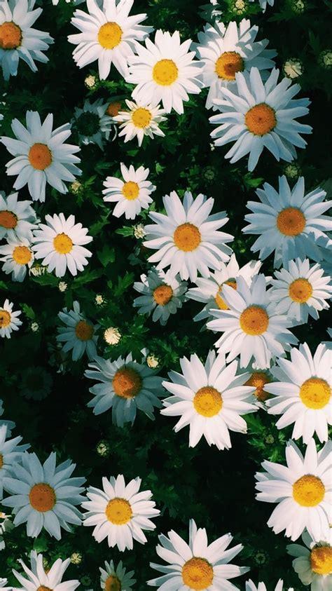 pin de vanessa murillo em wallpapers flowery wallpaper