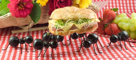 formiche in cucina rimedi rimedi naturali per tenere le formiche lontane