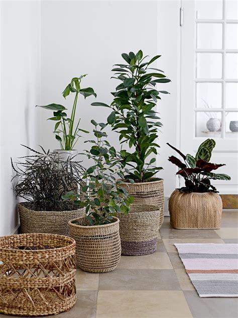 find stores  webshops plant decor indoor plants