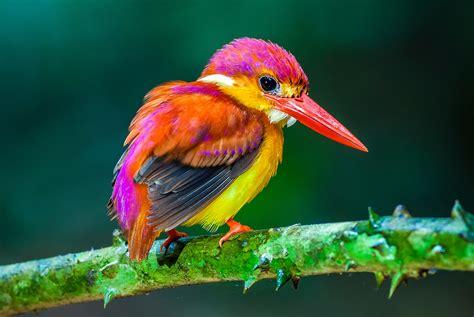 imagenes animales exoticos hermosos las 1000 aves ex 211 ticas m 225 s bellas del mundo 161 fotos y