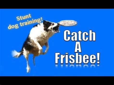 how to to catch frisbee my takes and won t come back how to your doovi