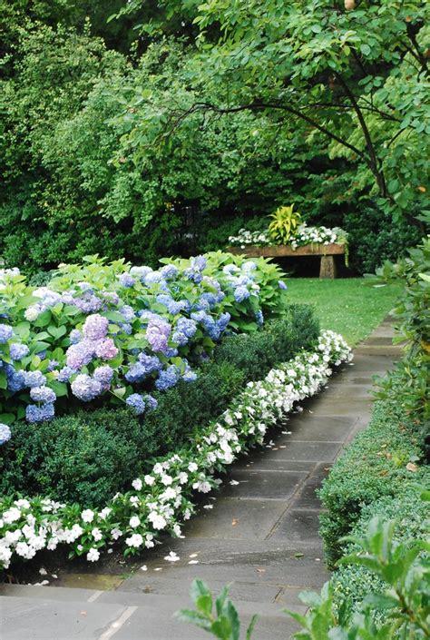 nikko blue hydrangeas garden magestyc pinterest