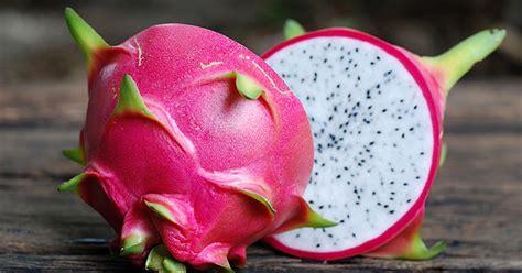Pembuat Buah Berkualitas inilah 5 cara membuat keripik buah naga yang bisa anda coba toko mesin maksindo