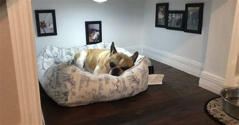 bedroom under the stairs man builds entire bedroom under stairs for his dog bored panda