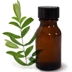 tea tree oil bed bugs 5 herbal remedies for yellow nails treat yellow nails