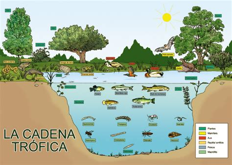 cadenas y redes troficas introduccion la naturaleza es vida mayo 2012