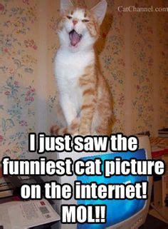 Fancy Cat Meme - cat memes on pinterest magazines cat and galleries