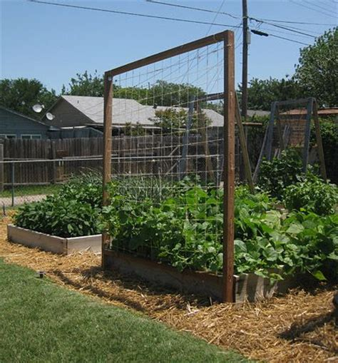 Thin Trellis Diy Trellis I M Thinking Thin Copper Wire Cedar And