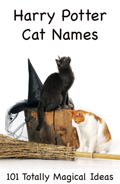 harry potter names 101 magical harry potter cat names
