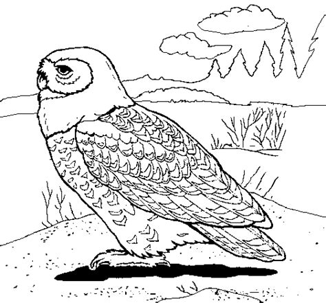 snowy owl coloring page coloringcrew com