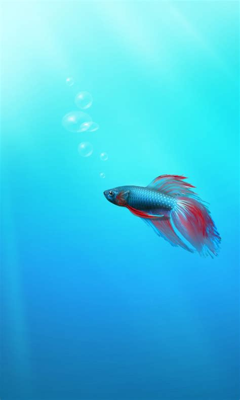 fish wallpaper for windows 10 fish towards the light wallpaper for windows phone 7