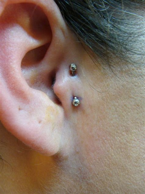 tragus piercing pictures and images page 5 vertical tragus piercing on vertical tragus vertical