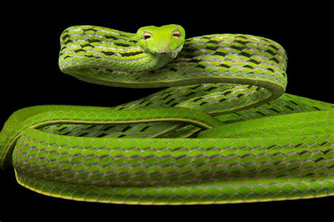 Animal World Snakes see 22 spectacular pictures of snakes