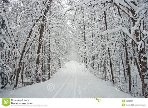 stassen fiori strada allineata albero di inverno con neve immagini stock