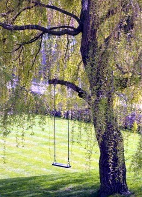 tree swing pictures 40 diy tree swing ideas for more family time