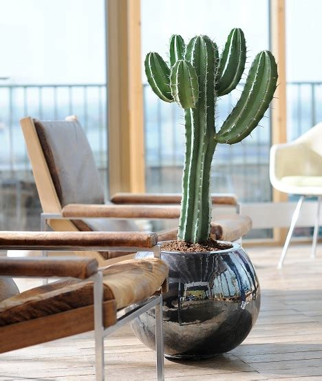 cactus da interno diamoci al verde le piante in salone positivit 224 e relax