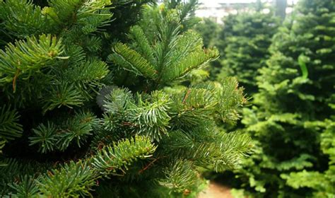 buy artificial christmas tree singapore christmas tree